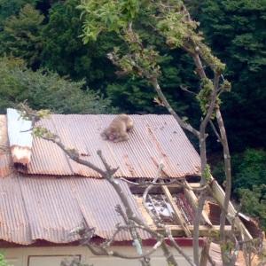 Kyoto Monkey Forest