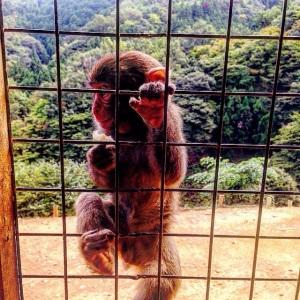 Kyoto Monkey Park