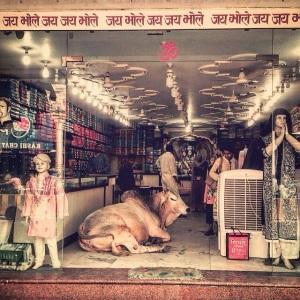 Varanasi Cow in Shop