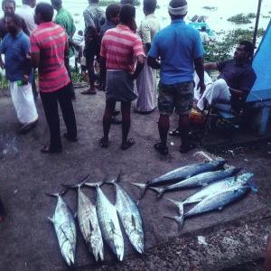 Kerala Fort Cochin Fish Auction