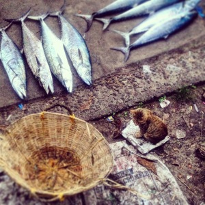 Kerala Fort Cochin Fishing