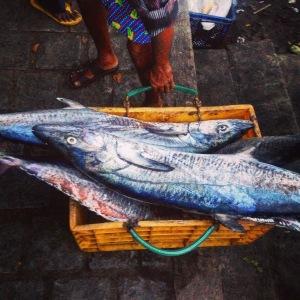 Kerala Fort Cochin Fish