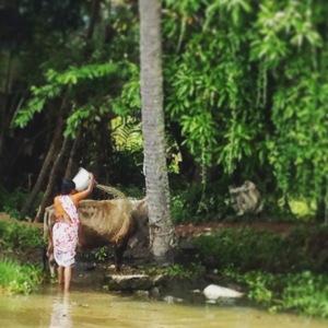Kerala Backwaters Cow