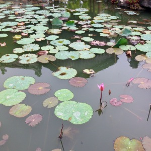 Hue Imperial City Lilypond