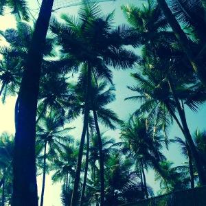 Palolem Beach Palm Trees Goa
